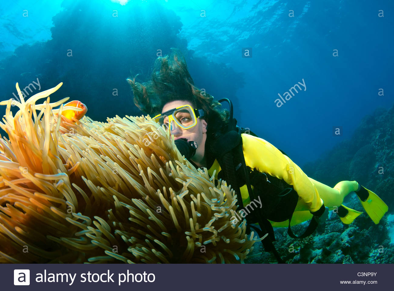 Femme de la plongée sur la Grande Barrière de corail en Australie Photo Stock