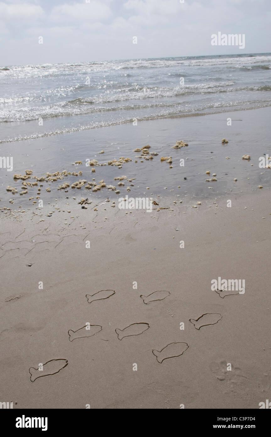 Allemagne, Schleswig Holstein, Amrum, poisson dessins sur sable Photo Stock