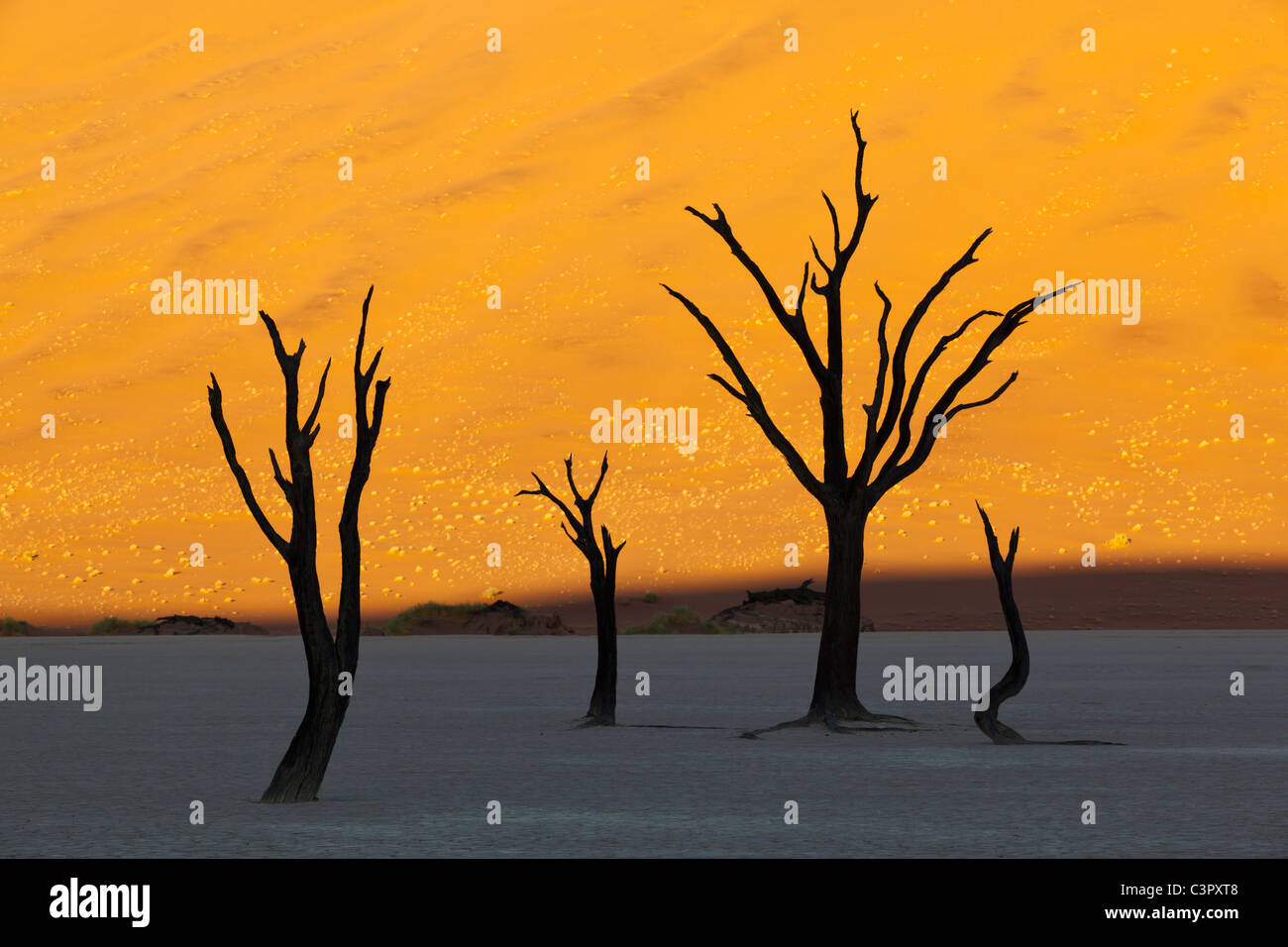 L'Afrique, la Namibie, le Parc National Namib Naukluft, arbre mort dans le désert de Namib Photo Stock