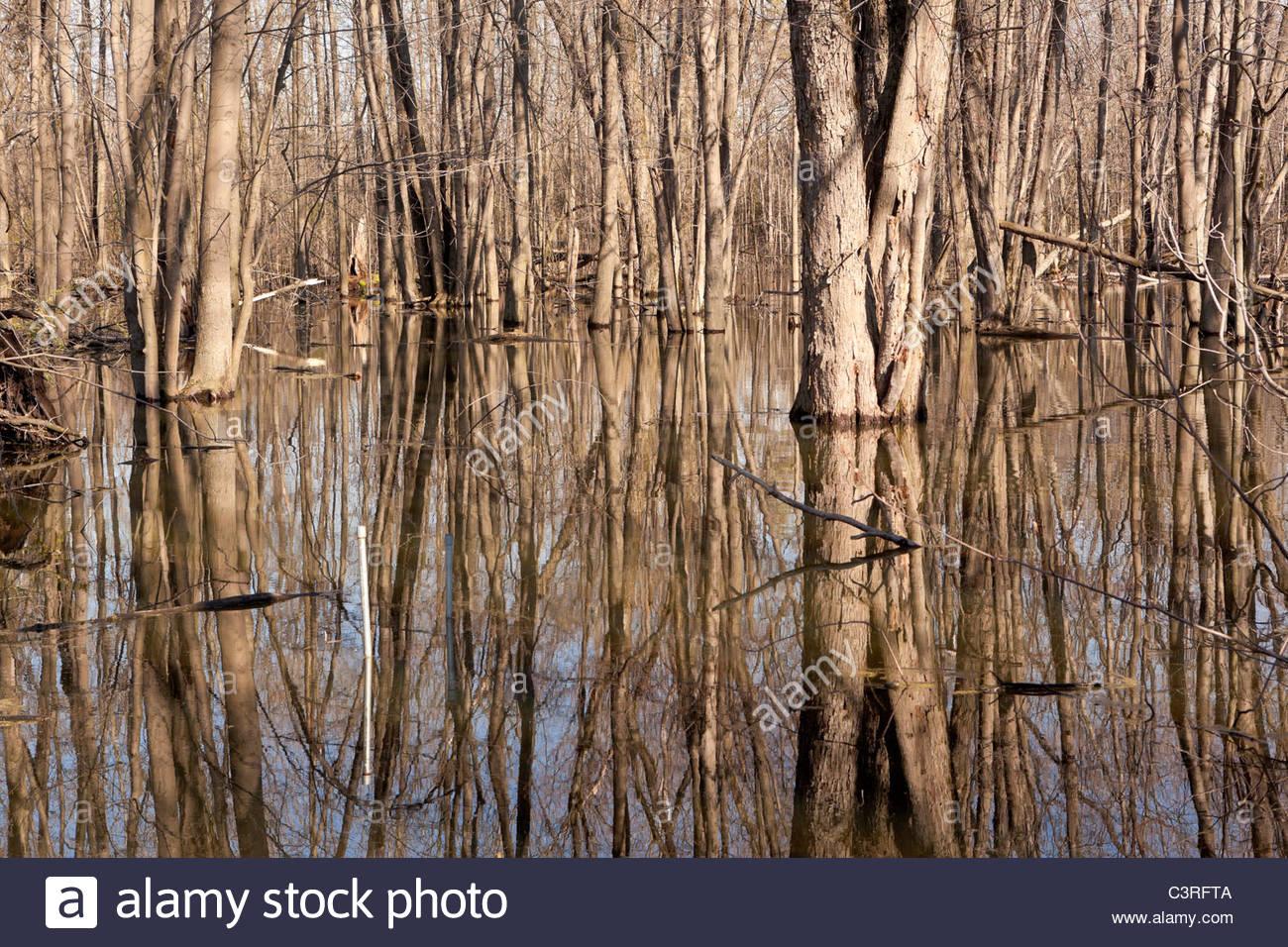 L'inondation du printemps par le jupon Creek dans le parc de la Rouge d'un désert urbain, à Pickering, Ontario Canada Banque D'Images