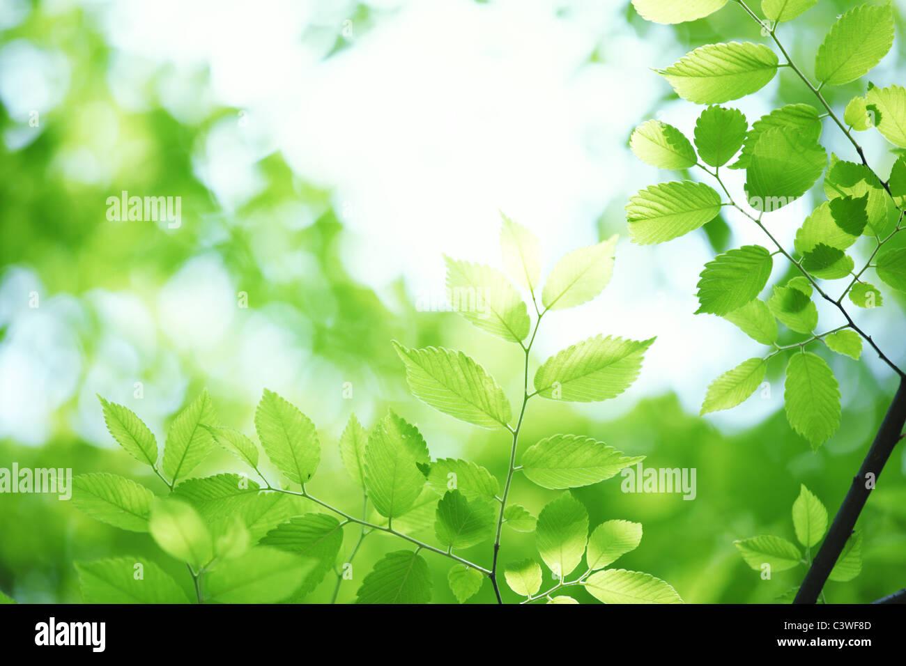 Feuilles vertes contre ciel clair Photo Stock
