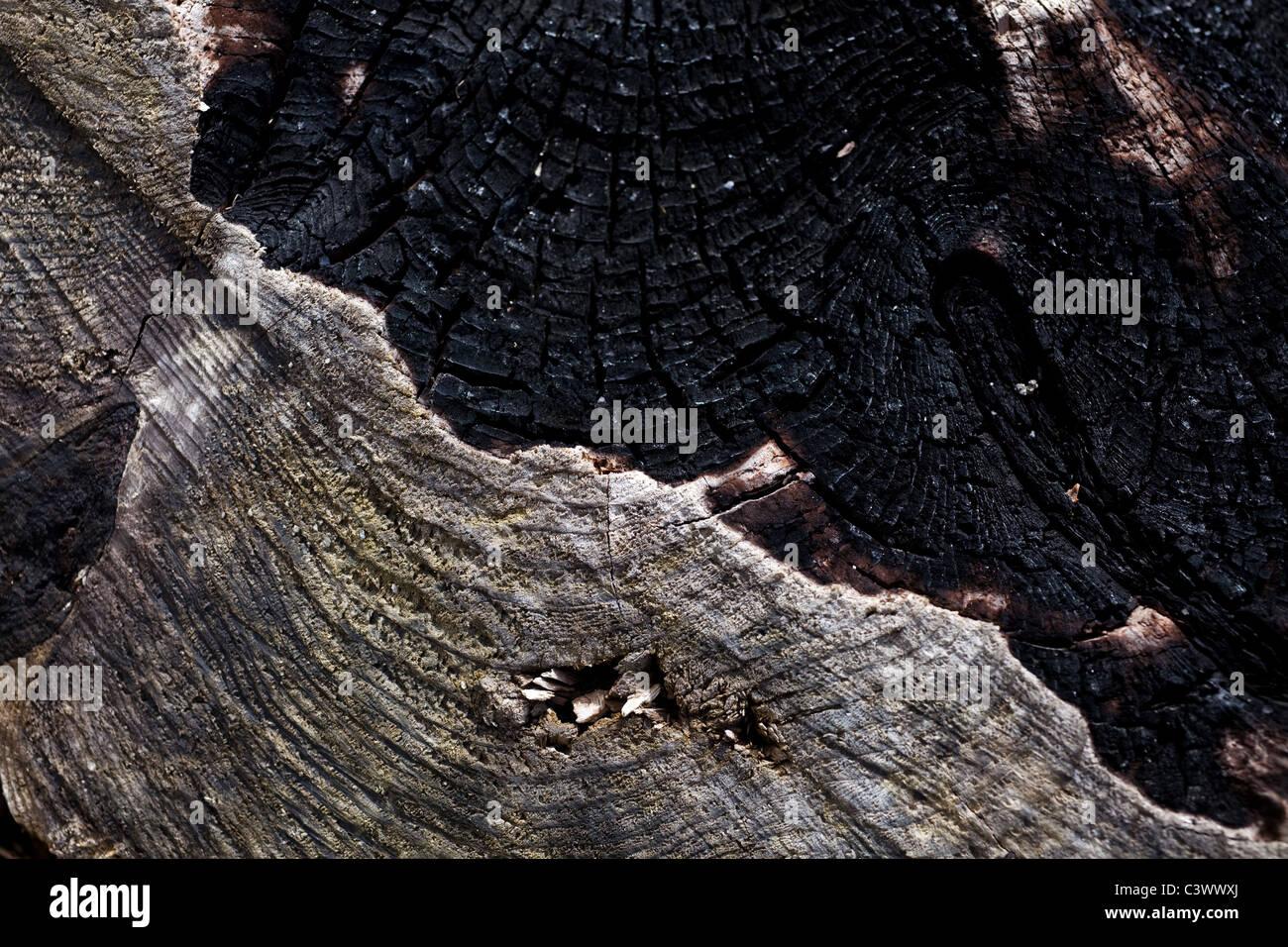 burned photos burned images alamy. Black Bedroom Furniture Sets. Home Design Ideas