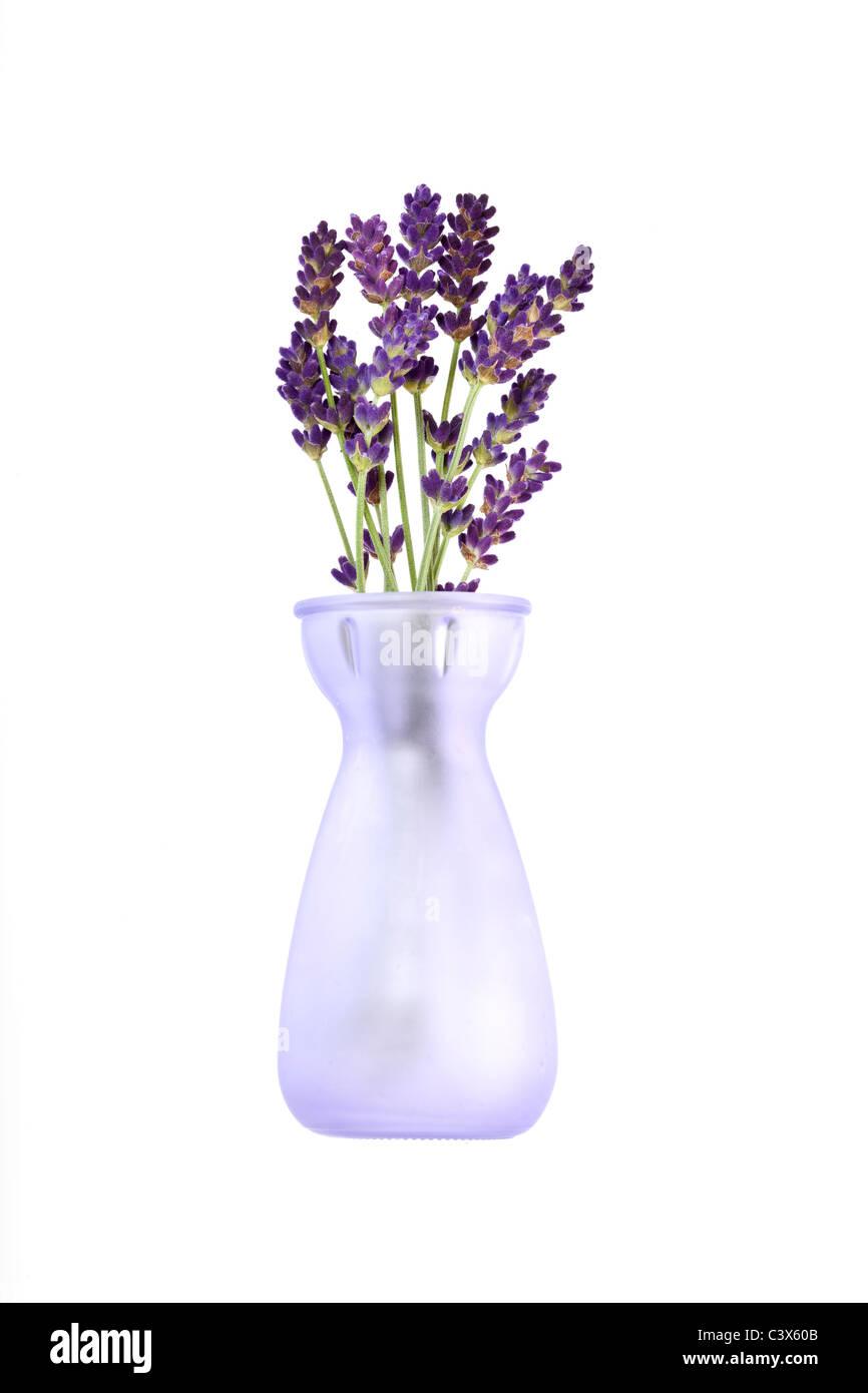 La lavande Lavendula dans petit vase en verre Banque D'Images