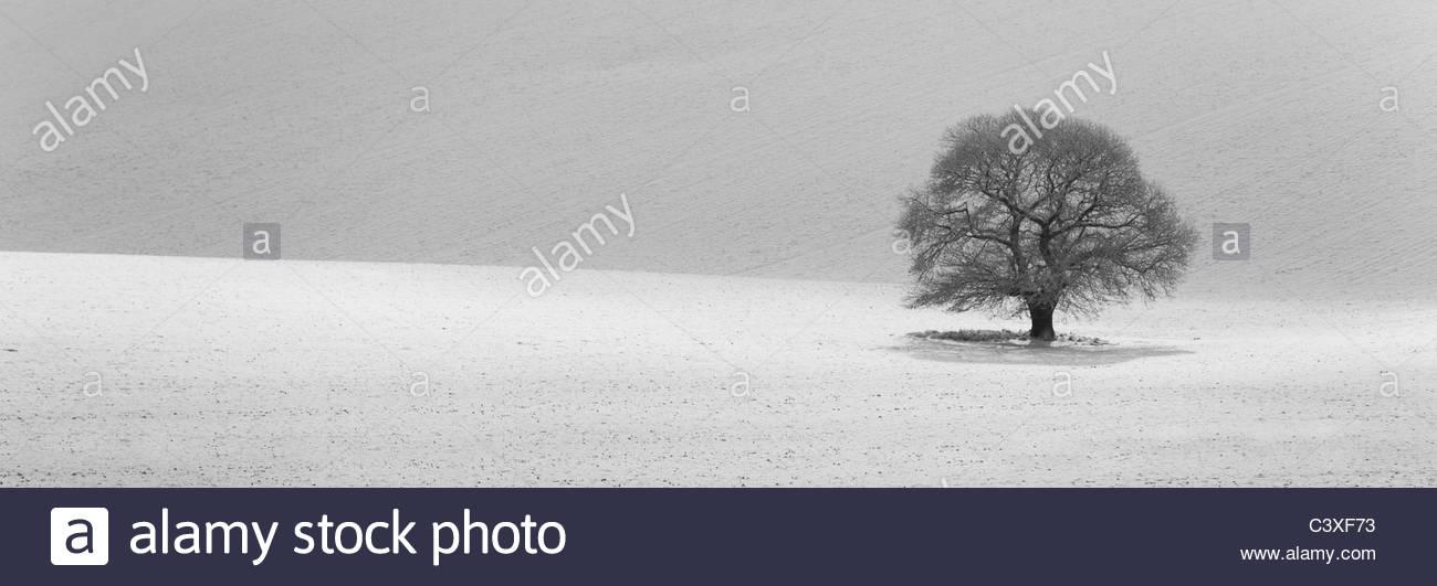 Arbre isolé dans un paysage couvert de neige Photo Stock