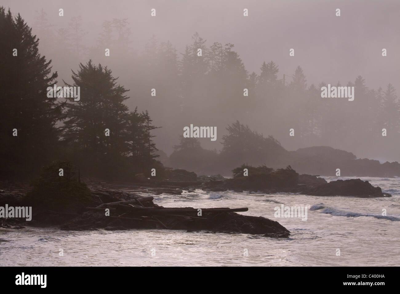 La lumière du soleil filtrée par la brume et les arbres, parc national Pacific Rim, l'île de Vancouver, Colombie-Britannique Banque D'Images