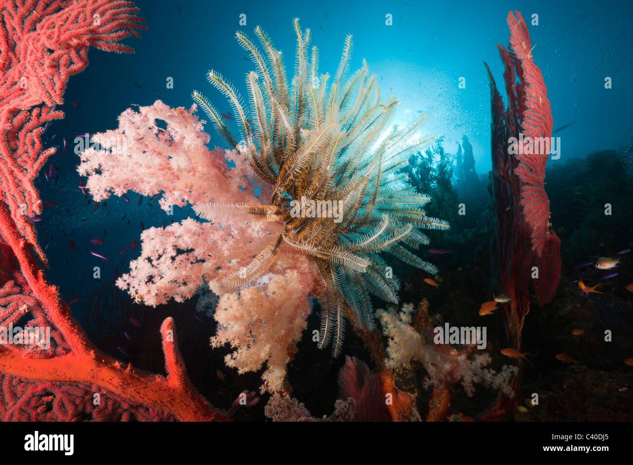 Coral Reef, Namena Réserve Marine, Fidji Photo Stock