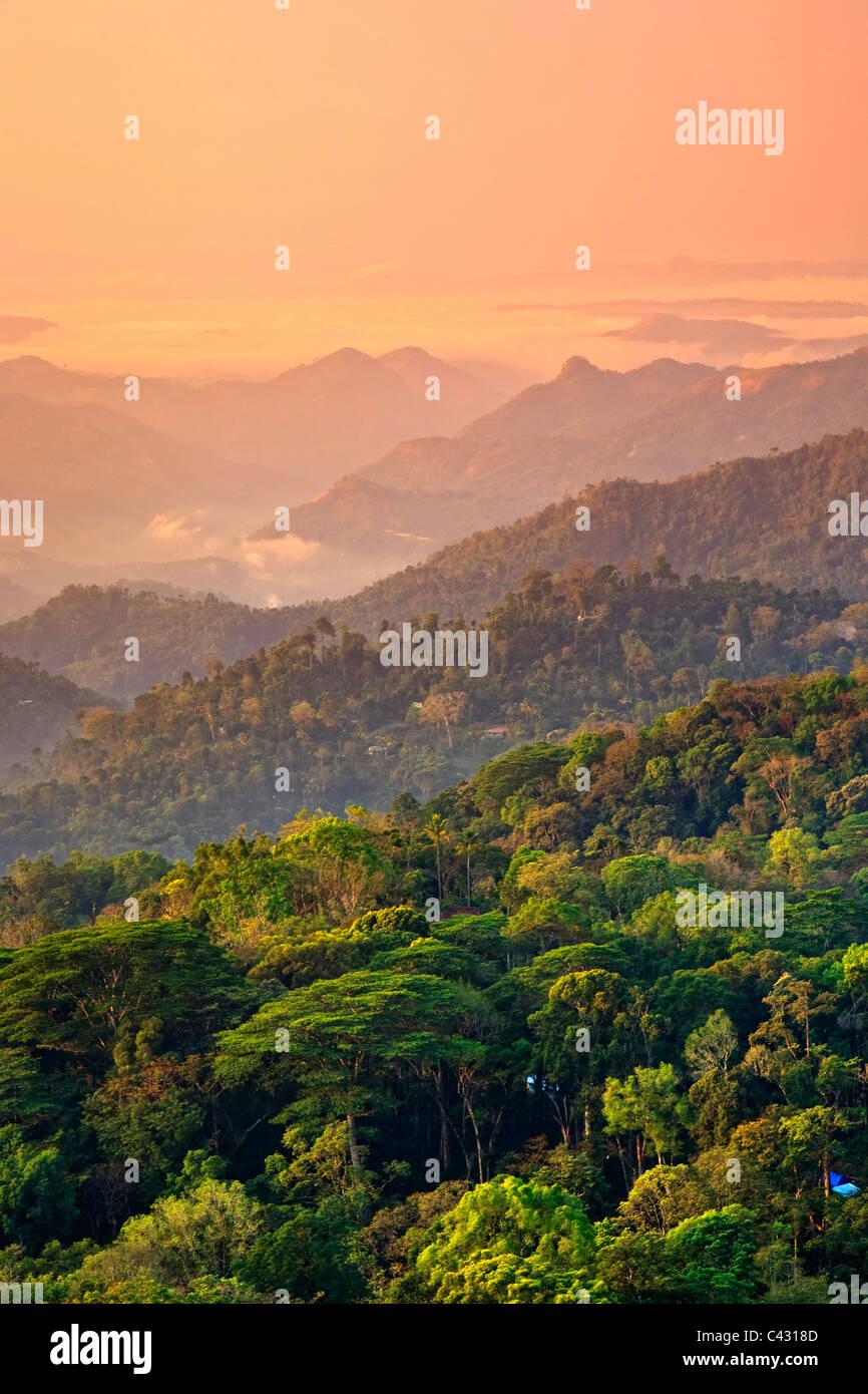 Les plantations de thé, Munnar, Western Ghats, Kerala, Inde du Sud Photo Stock