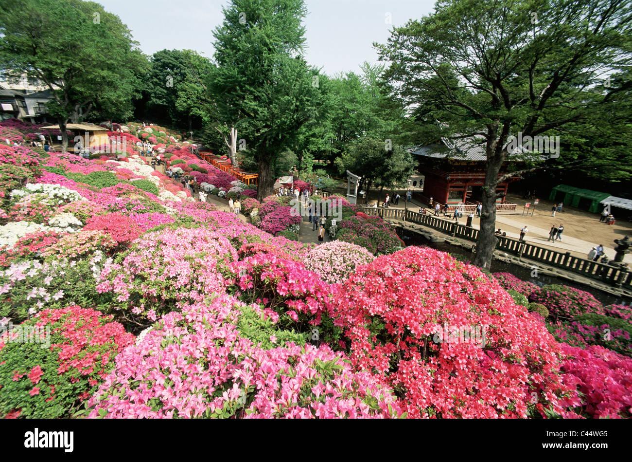 L Asie L Azalee Azalee Fleur Fleur Fleurs Jardin Maison De