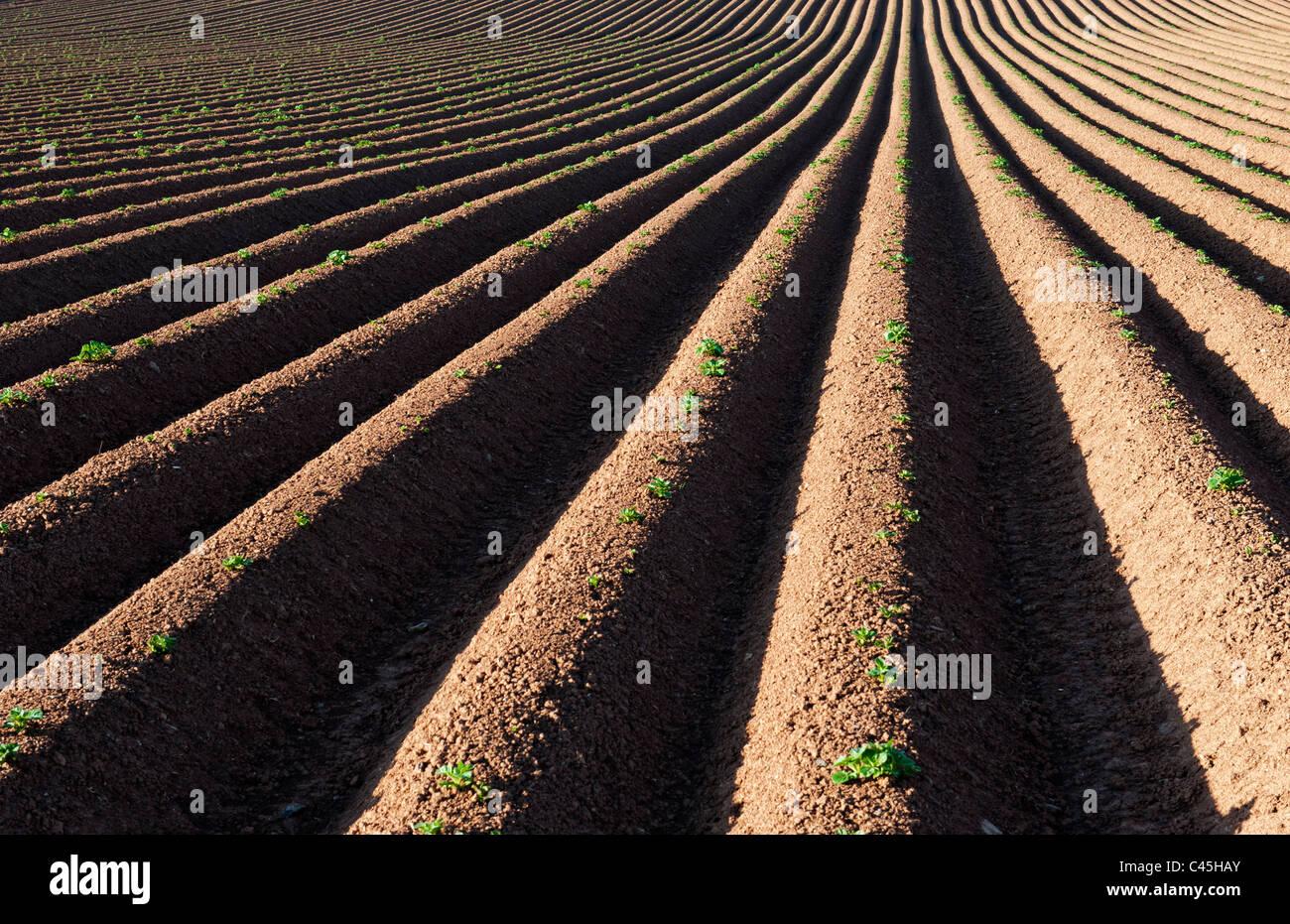 Ridge et sillon champ labouré. UK Photo Stock