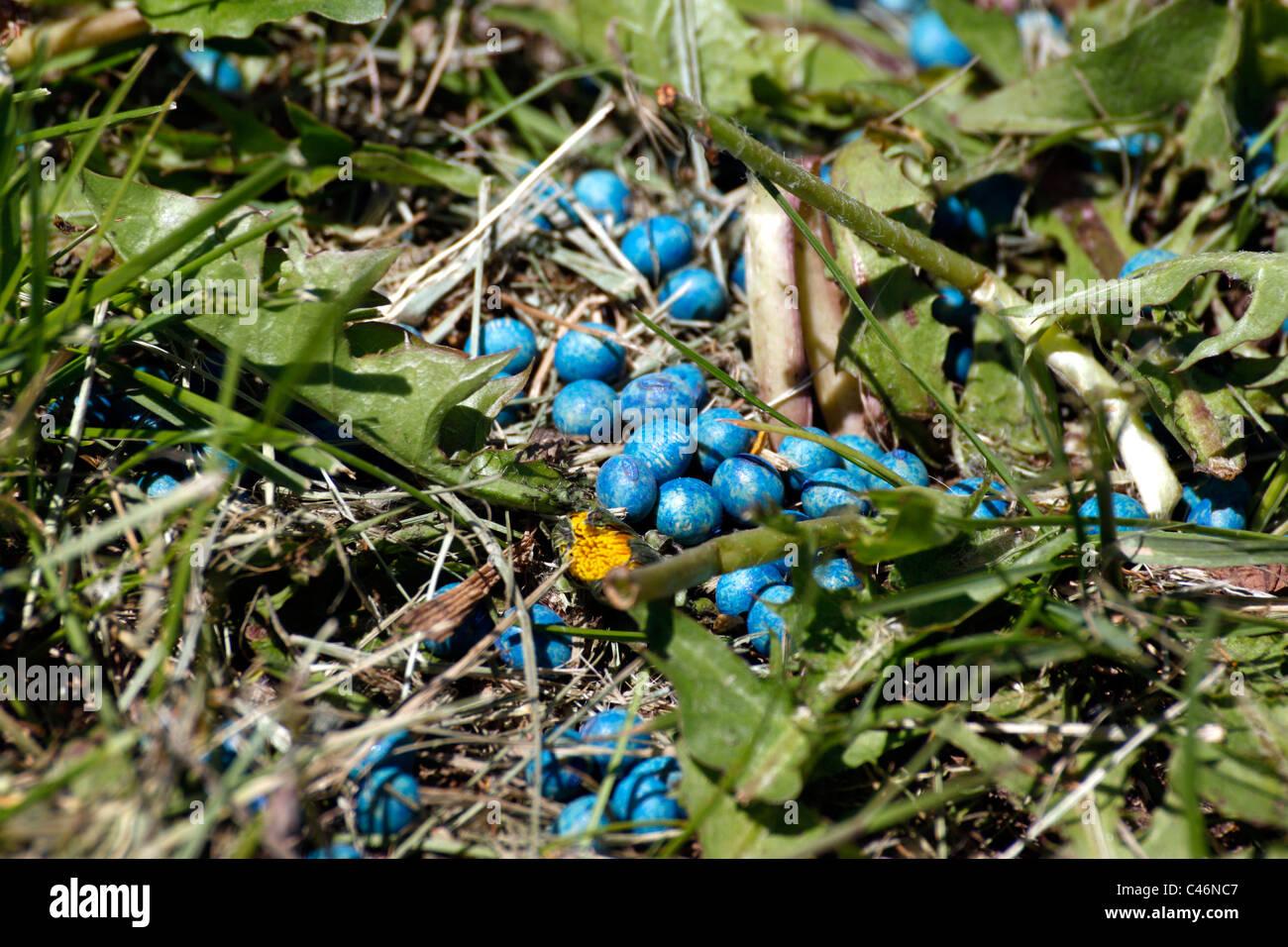 Graine de soja déversé en revêtement fongicide bleu(?) Photo Stock