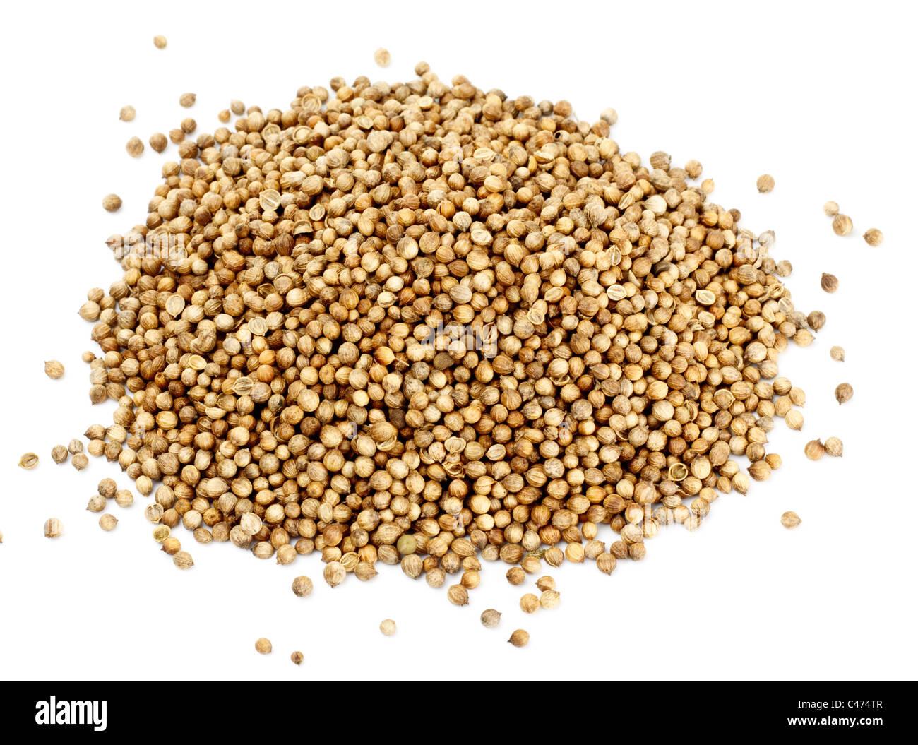 Beaucoup de graines de coriandre isolé sur fond blanc Photo Stock