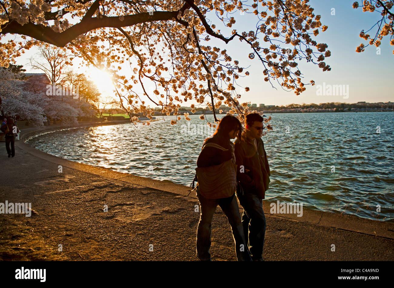 Un homme & femme marche le chemin autour du Tidal Basin à Washington DC, au coucher du soleil pendant les heures de grande floraison de fleurs de la cerise Banque D'Images