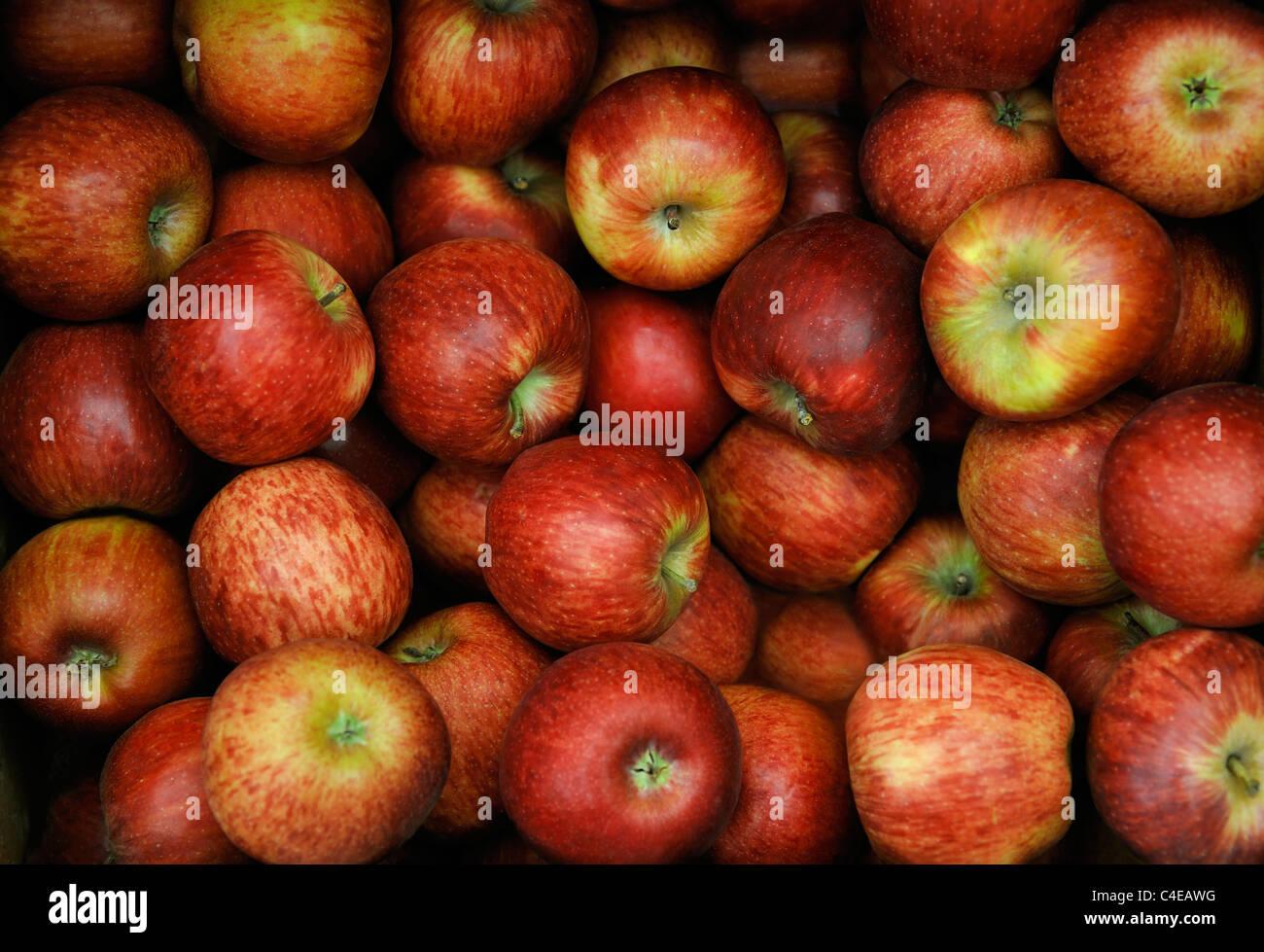 Pommes ROUGES BIOLOGIQUES Photo Stock