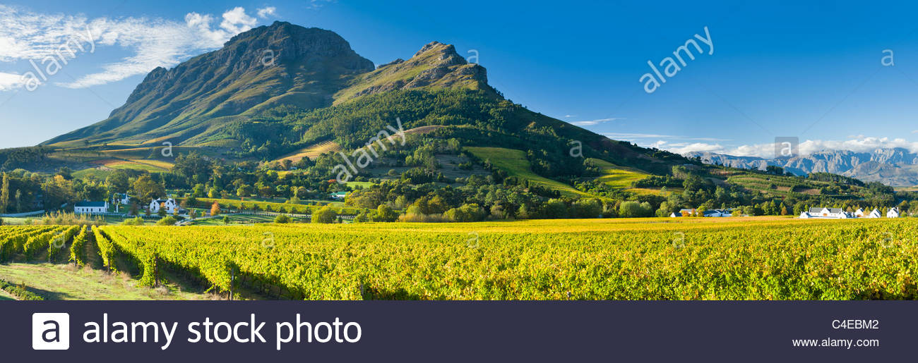 La montagne de Simonsberg plane sur l'Zorgvliet Wine Estate, près de Stellenbosch, Afrique du Sud. Photo Stock