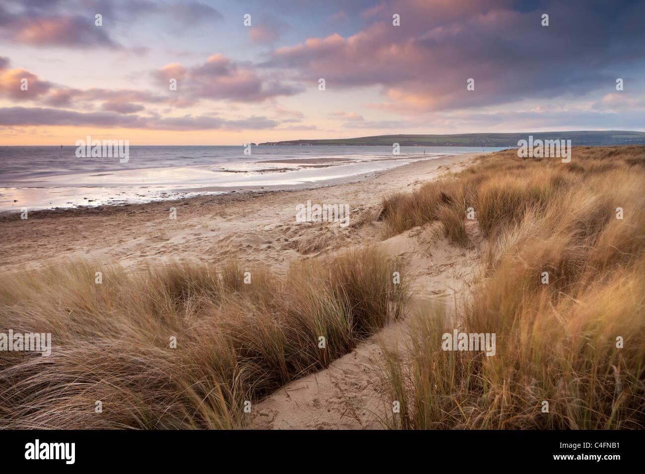 Dunes de sable balayées par le vent sur la plage de Studland Bay, Dorset, Angleterre. L'hiver (février) Photo Stock