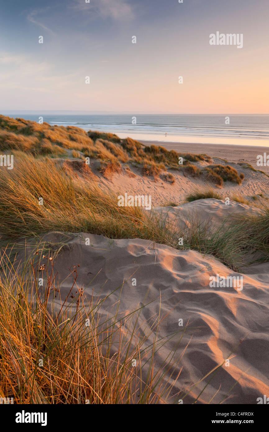 L'ammophile sur les dunes de sable de Braunton Burrows, regard vers Saunton Sands Beach, Devon, Angleterre. Photo Stock