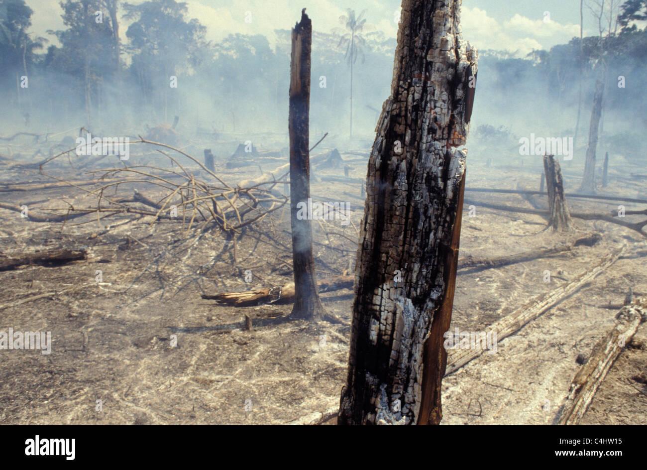 Forêt Amazonienne la gravure. La déforestation. Le Brésil. Arbres brûlés, déséquilibre Photo Stock