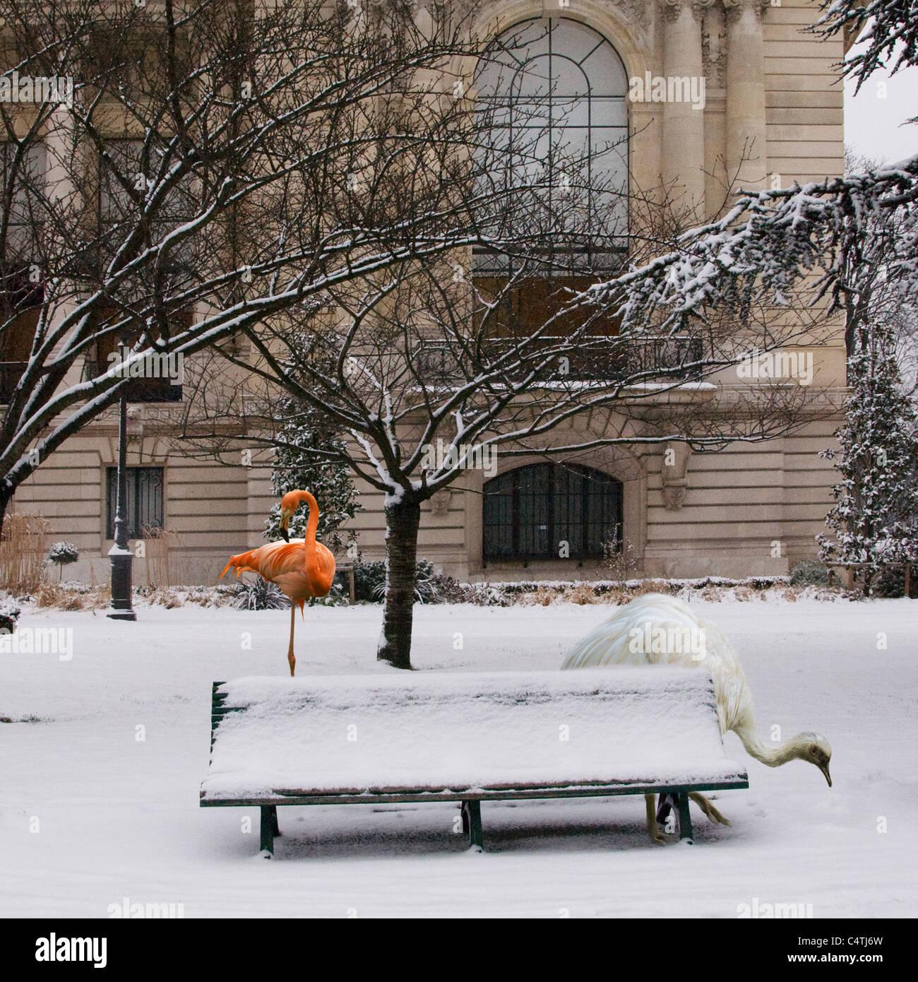 American flamingo et nandou standing in snowy scène urbaine Photo Stock