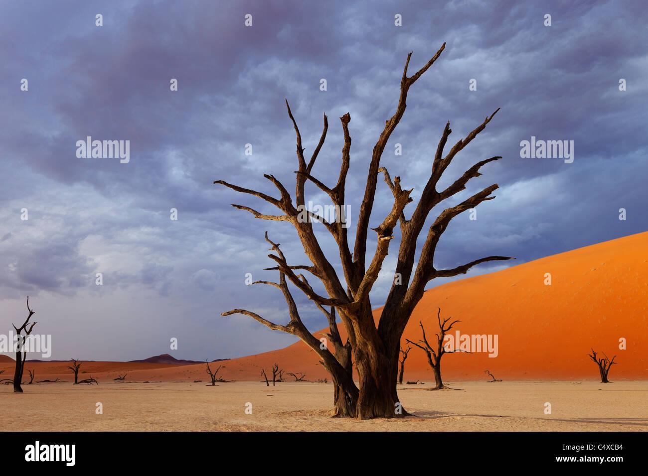 Les nuages de tempête et l'arbre mort. Dead Vlei.La Namibie Photo Stock