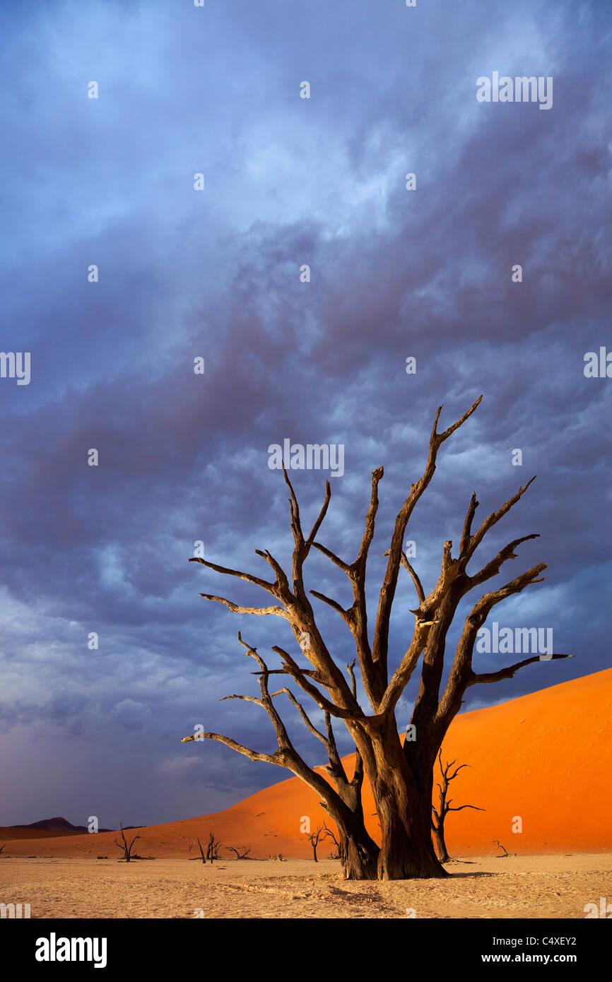 Marais salant. Dead Vlei.La Namibie Photo Stock