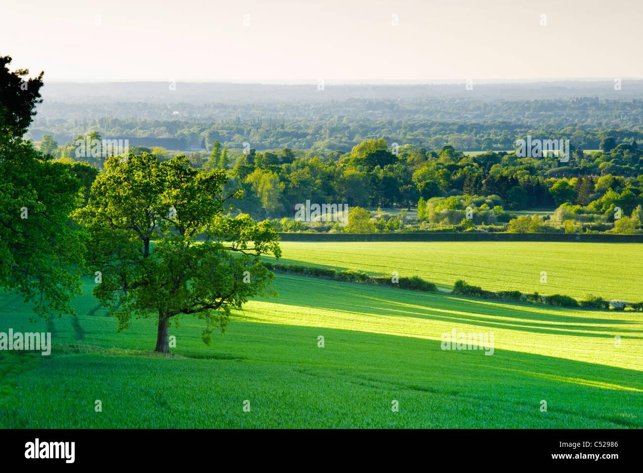 Les terres agricoles et campagne près de Guildford, Surrey, UK. Photo Stock