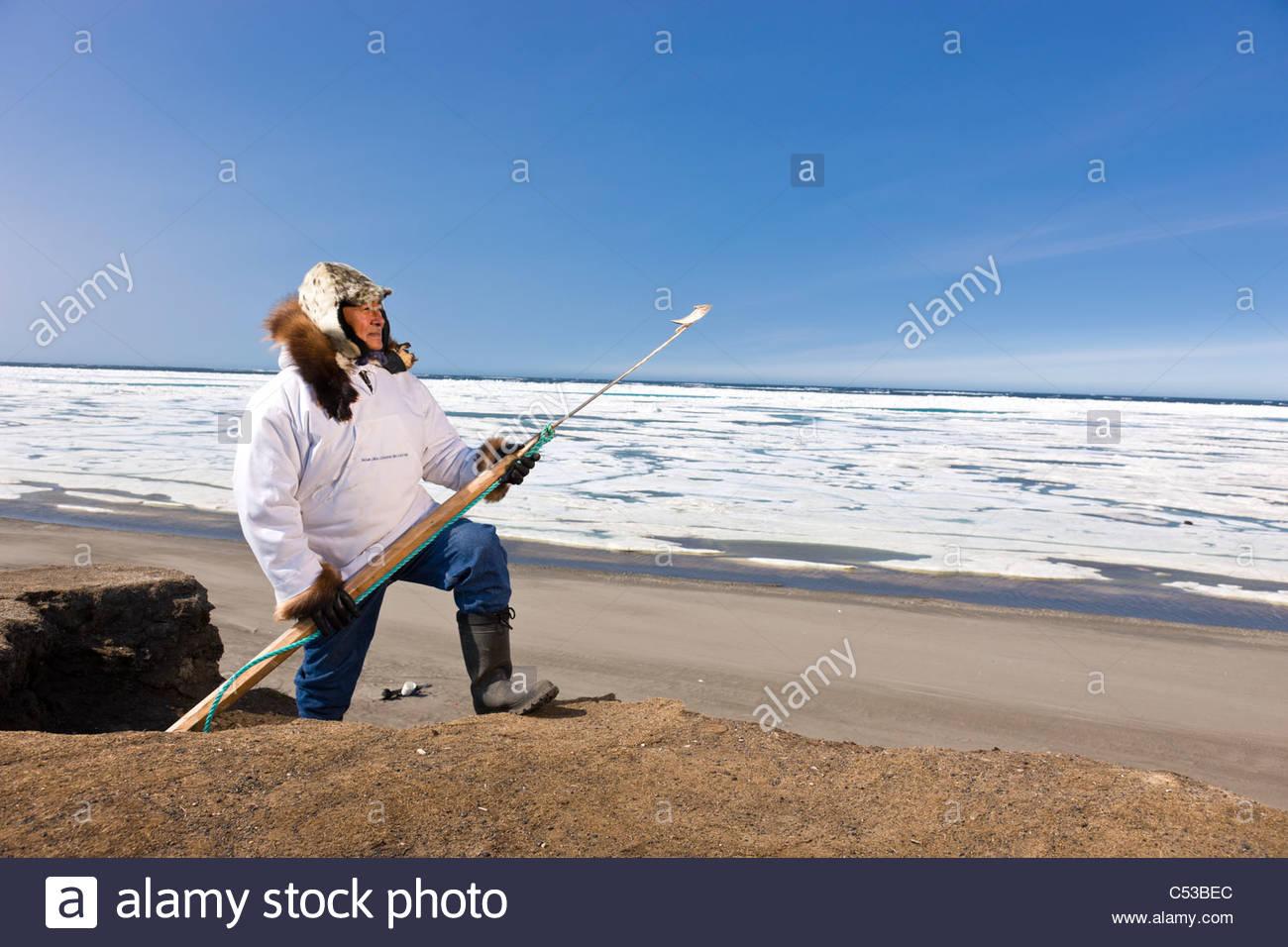 Esquimau inupiak tenant un bâton de marche à l'ancienne Utkeagvik site ville d'origine donnant Photo Stock