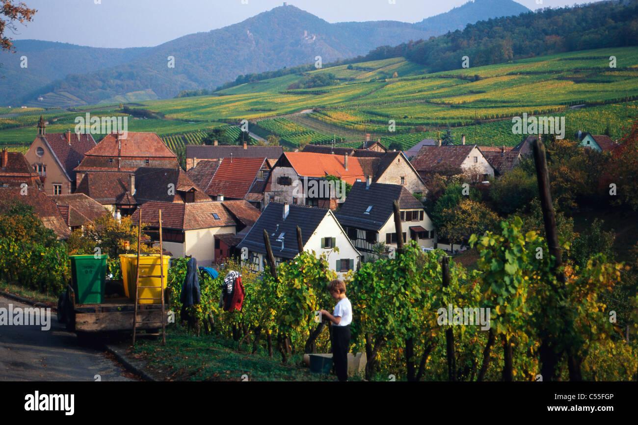 France, Alsace, Hunawihr, vignoble et le paysage urbain Banque D'Images