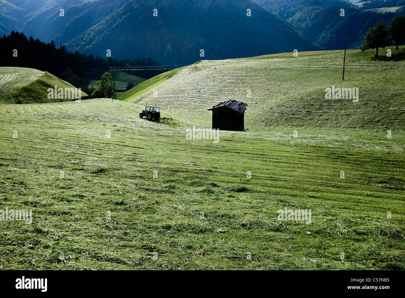 Cabane dans les champs de culture rurale Photo Stock