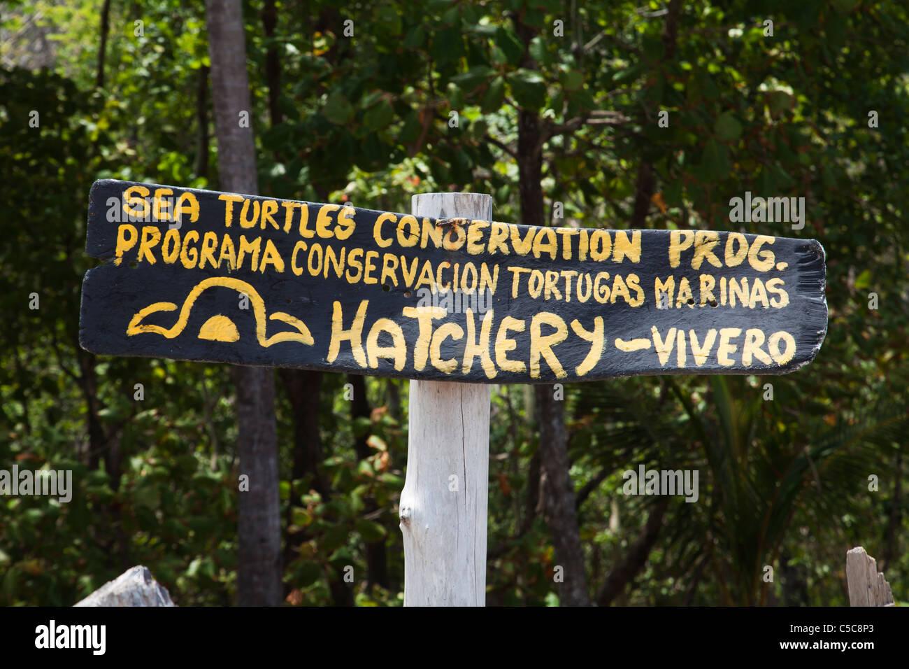 Projet de conservation des tortues de mer Costa Rica Montezuma Photo Stock