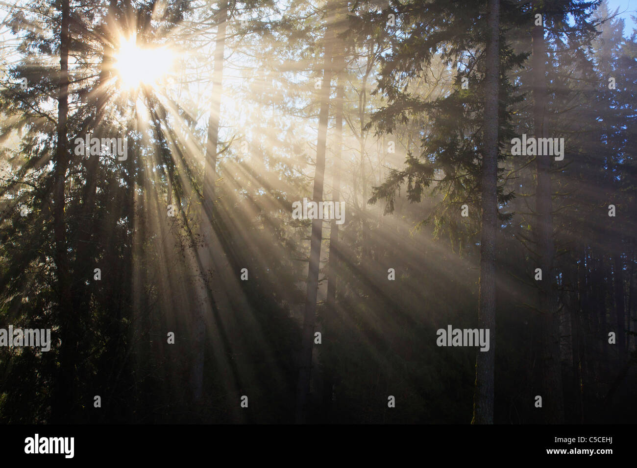 Soleil qui brille à travers le brouillard du matin et arbres ; Happy Valley, Oregon, United States of Photo Stock