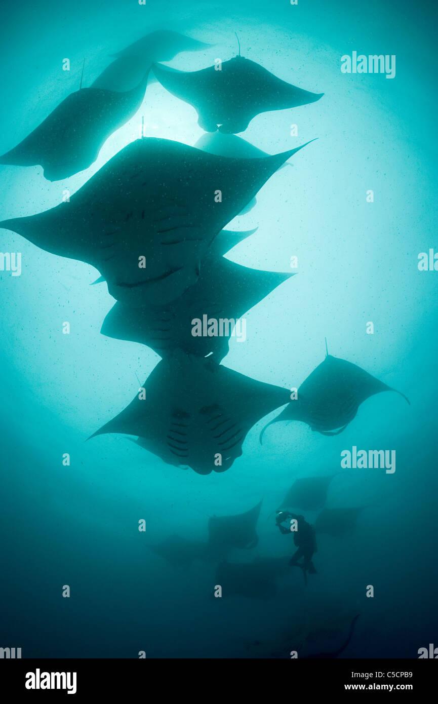 Photos de plongée Manta Reef, Maldives, lagon Hanifaru Photo Stock