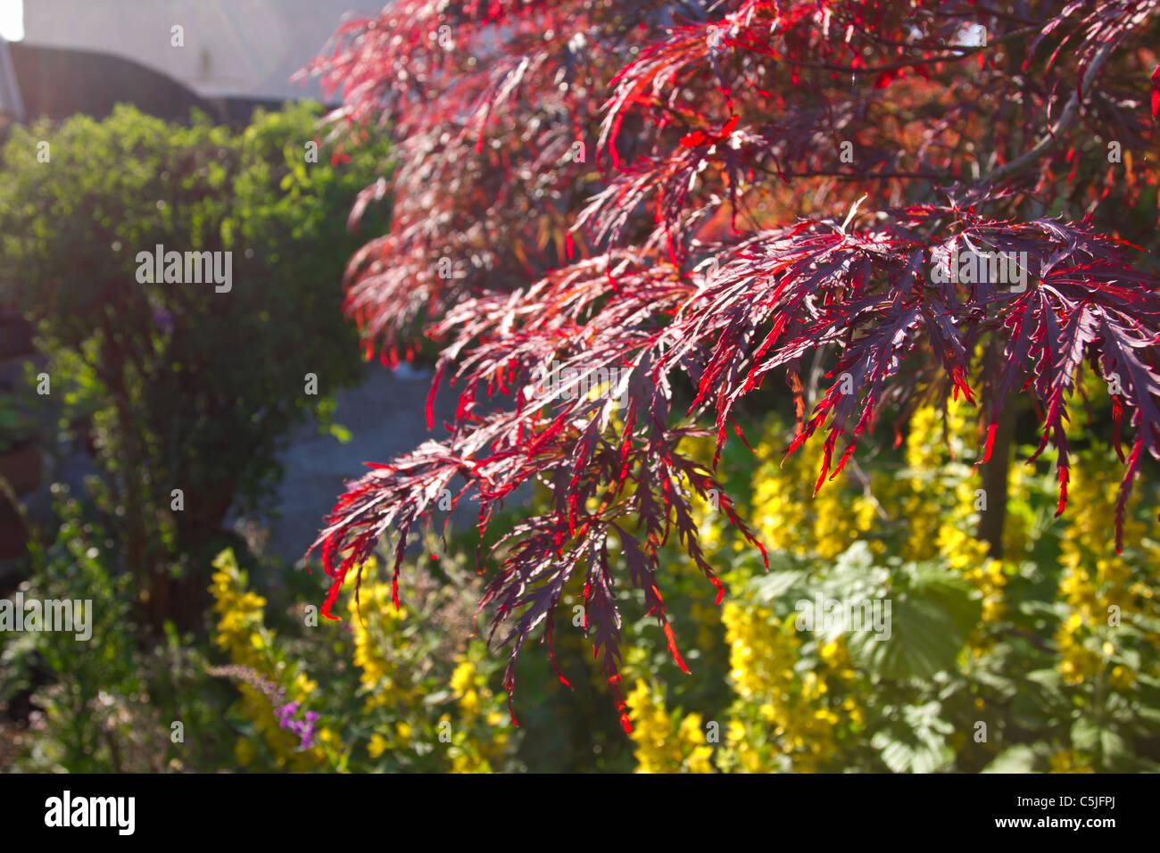 Jardin Anglais envahi rempli de fleurs, arbustes et arbres Banque D ...