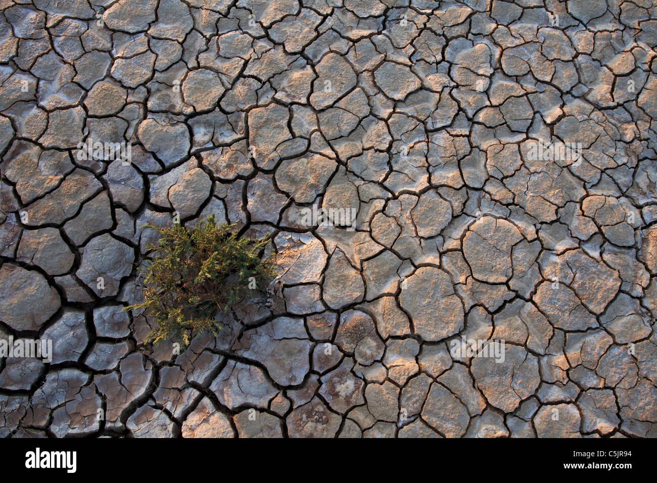 Dry Lake bed, Anza-Borrego Desert State Park, Californie. Photo Stock