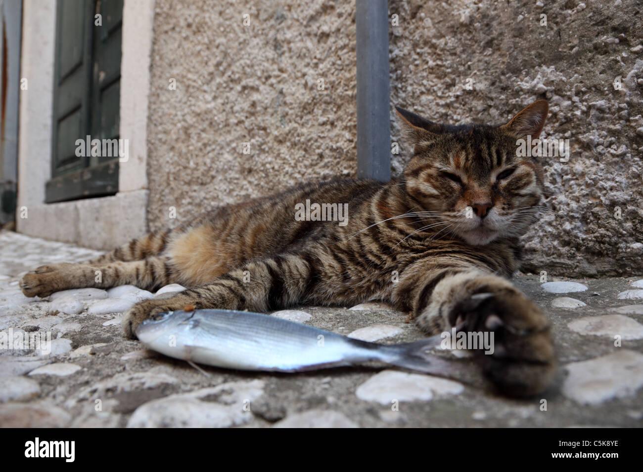 Avec un poisson chat paresseux Photo Stock
