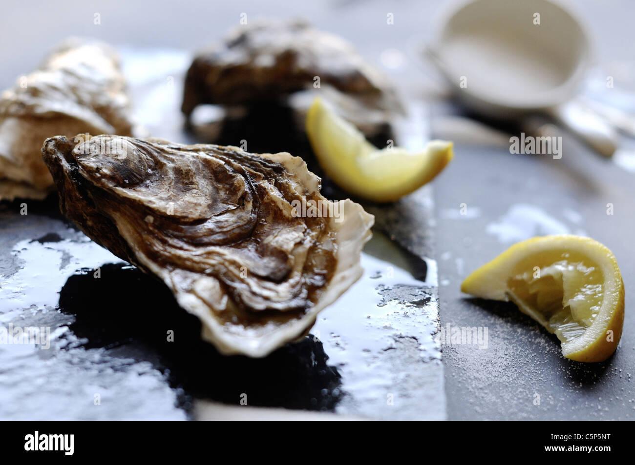 Les huîtres avec du citron et du sel Photo Stock