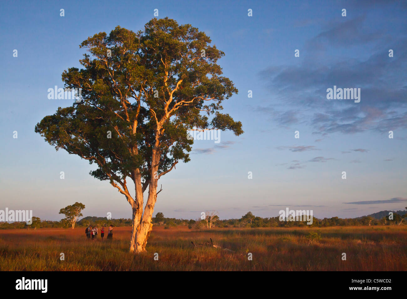 Les touristes au lever du soleil dans l'écosystème de savane unique de KOH PHRA THONG, THAÏLANDE Photo Stock