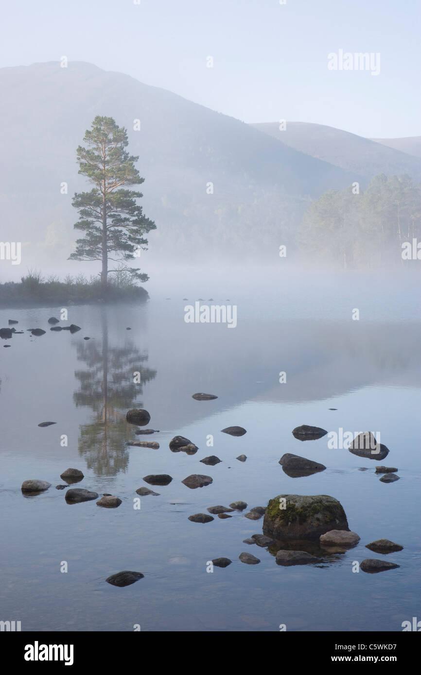 Loch an Eilein sur matin de printemps, Rothiemurchus Forest, parc national de Cairngorms, en Écosse, en Grande-Bretagne. Banque D'Images