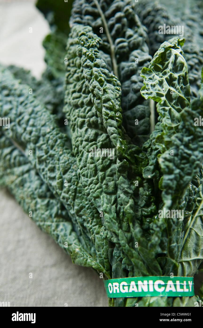 Kale bio frais Photo Stock