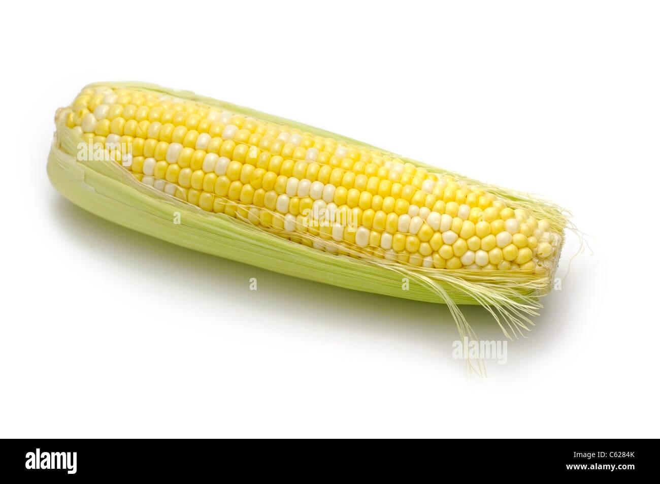 Le maïs, le maïs en épi Photo Stock