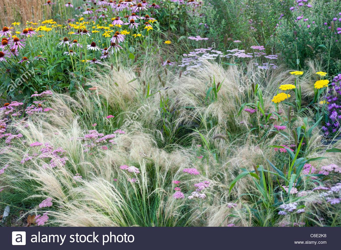 Frontière avec la fin de l\'été jardin des plantes vivaces à fleurs ...