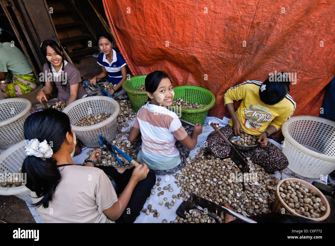 Les filles la fissuration ouvrir noix de bétel, Bago (Pegu), le Myanmar (Birmanie) Photo Stock