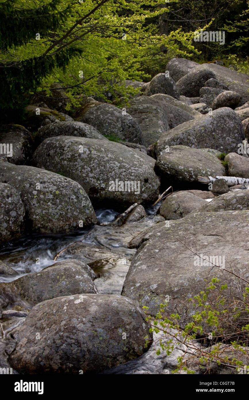 Pierre Vitosha river, également appelé exécuter en pierre, de la pierre ou de la pierre d'eau mer, formé à partir Banque D'Images