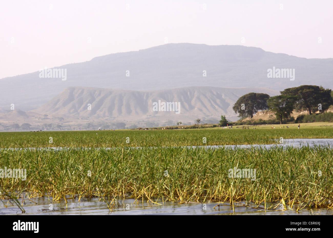 Cratère volcanique éteint vue du lac Awassa Banque D'Images