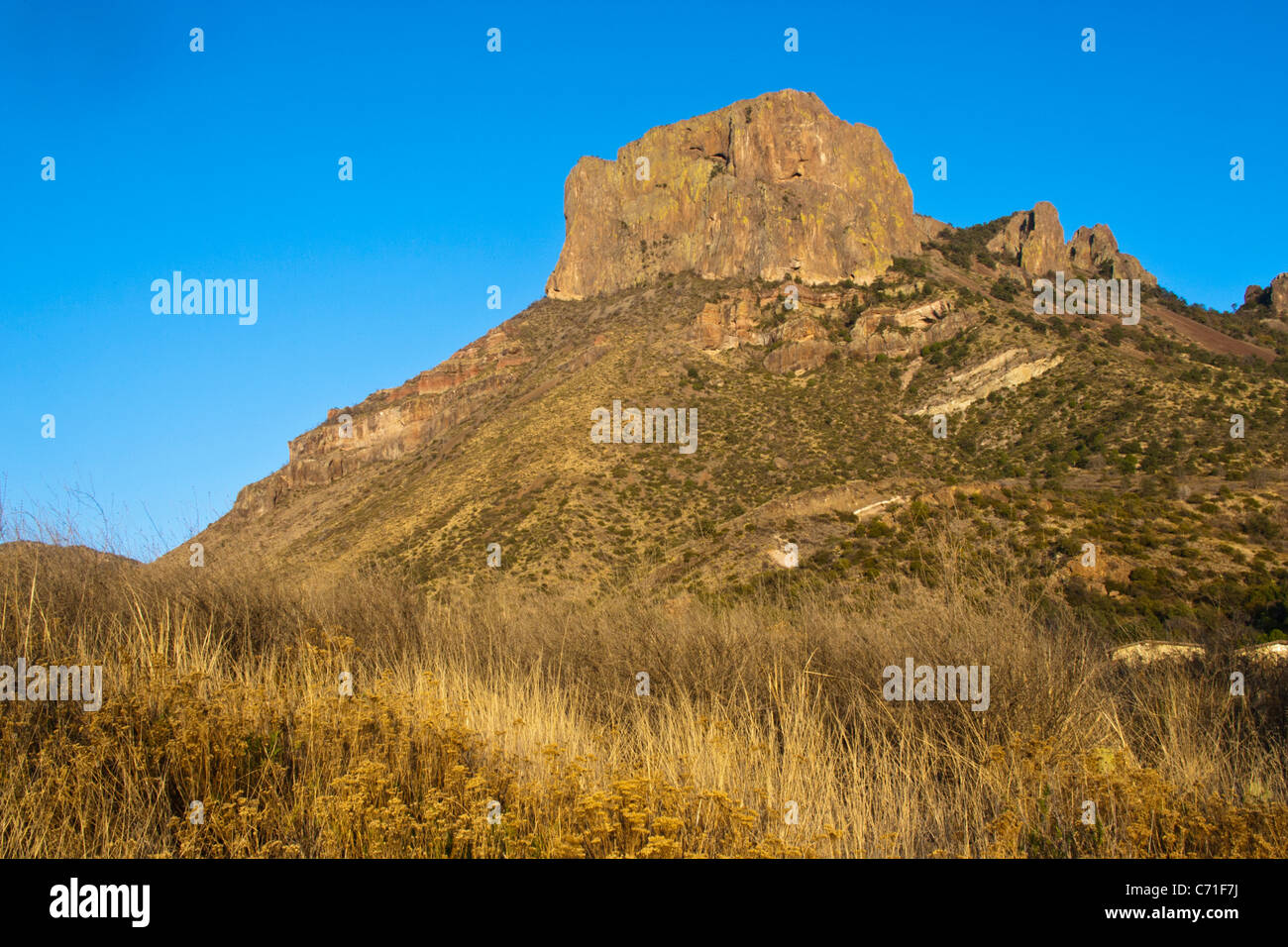 La lumière dorée du soleil couchant sur l'herbe dans le pré près de 'La fenêtre' dans les montagnes Chiso à Big Bend National Park, Texas. Banque D'Images