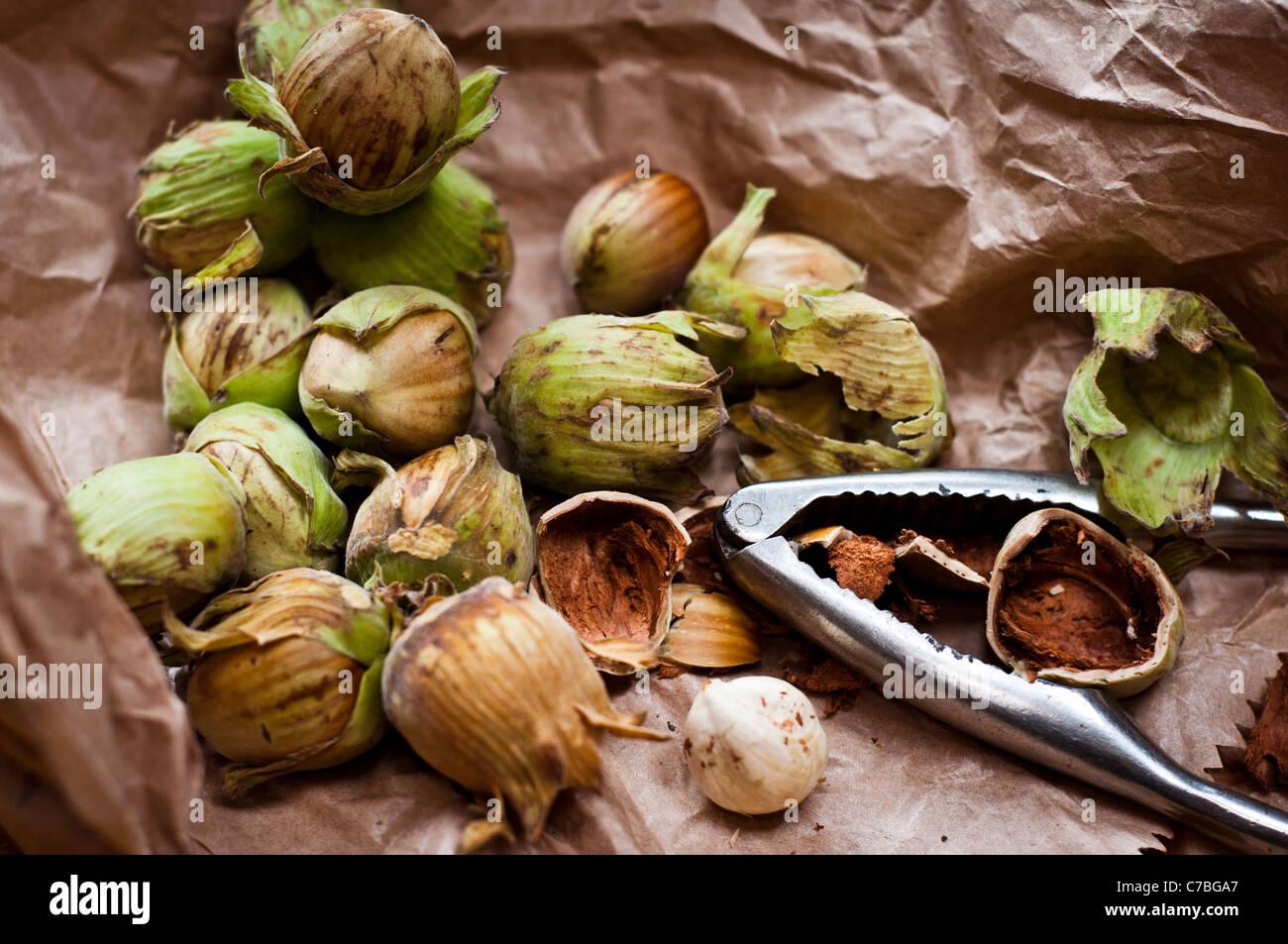 Kentish cobnuts frais entier avec le cassenoix sur sac en papier brun Photo Stock