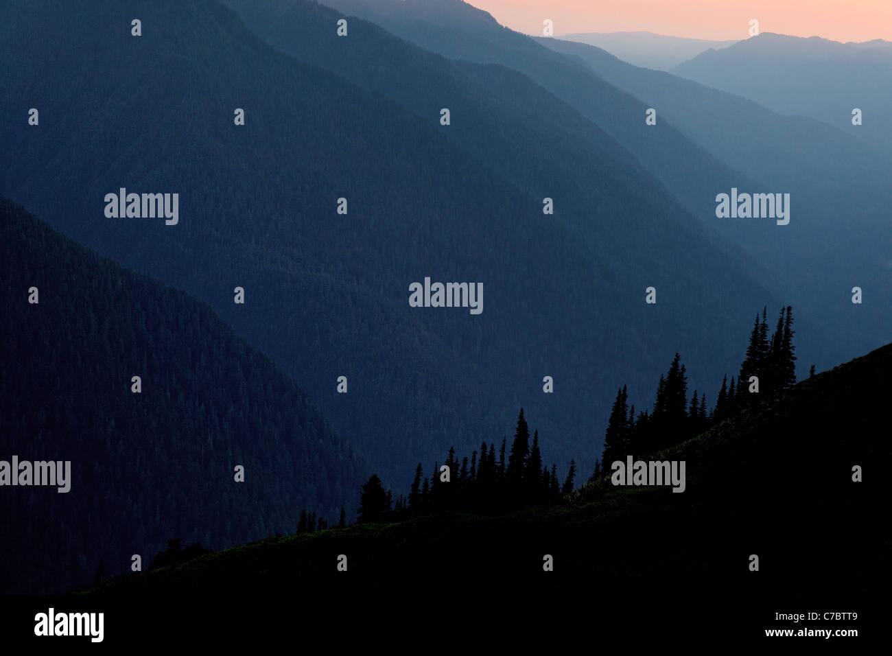 L'éclairage atmosphérique dans la vallée de la rivière Hoh, Olympic National Park, Washington Photo Stock