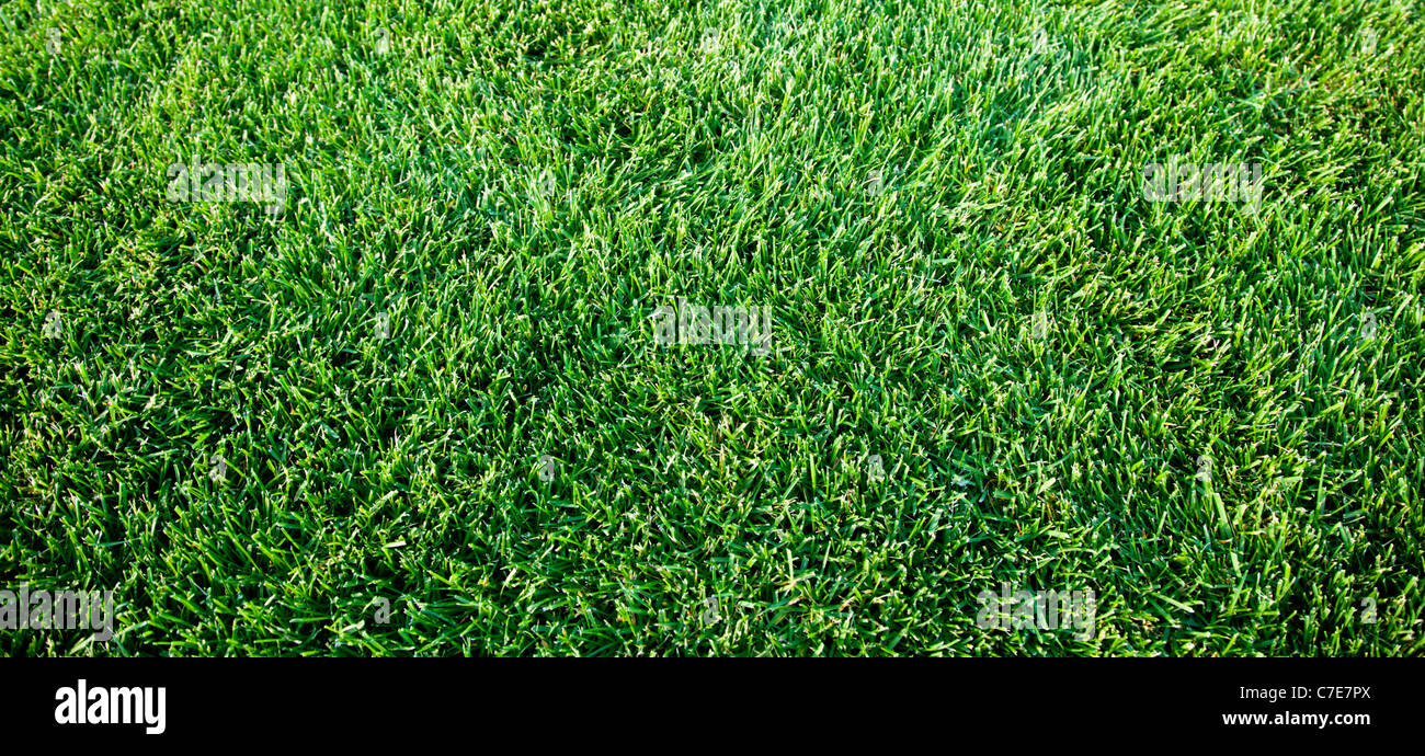 Close up shot of fresh spring Green grass. Photo Stock