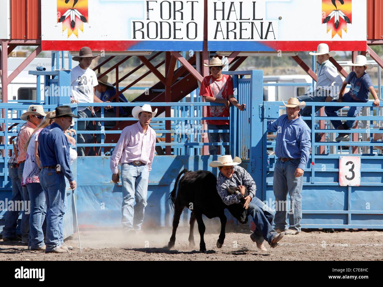 Jeune concurrent dans la lutte, ou d'un veau veau dogging, cas de rodeo tenue sur la réserve de Fort Hall Photo Stock
