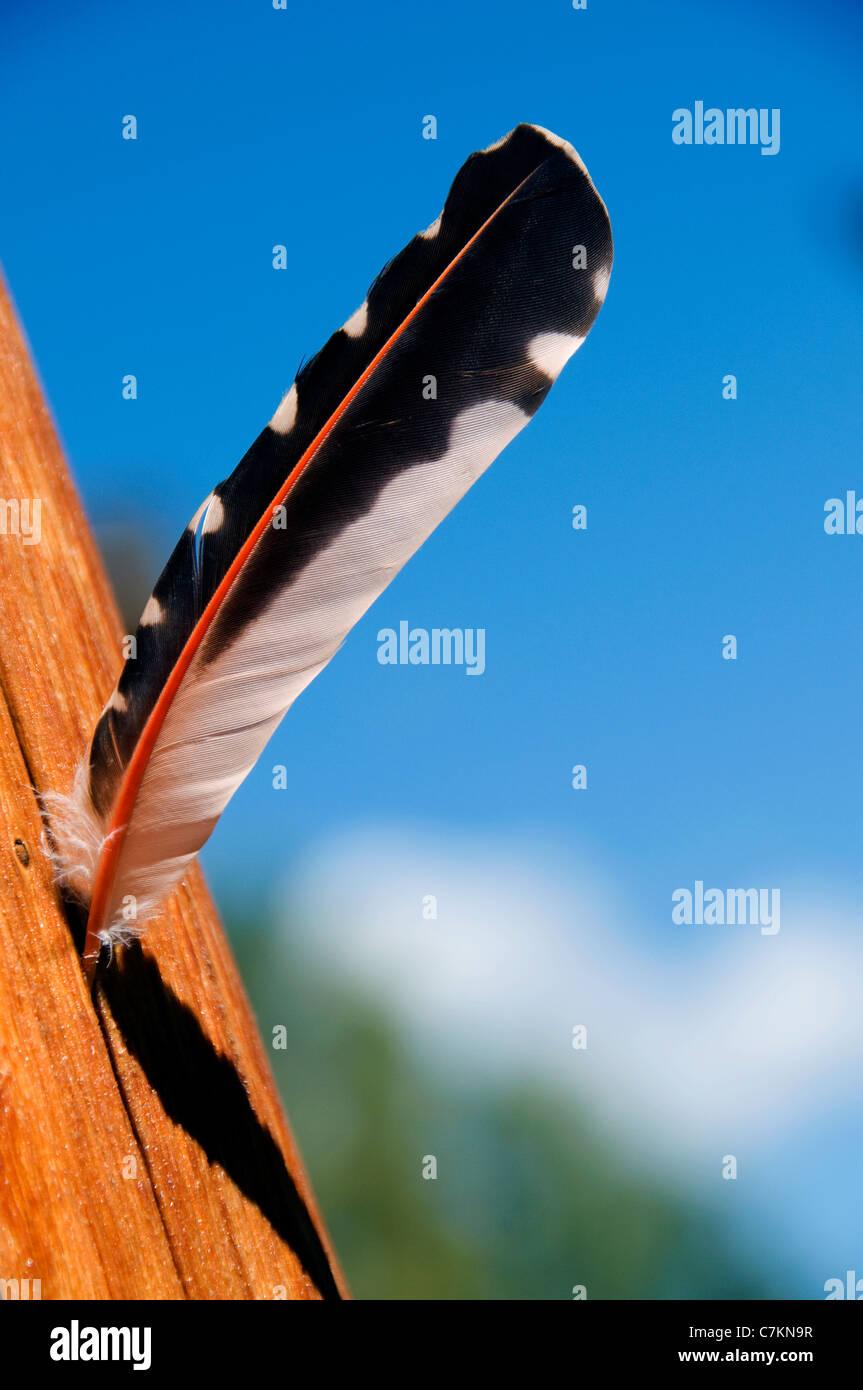plume d'oiseau Photo Stock