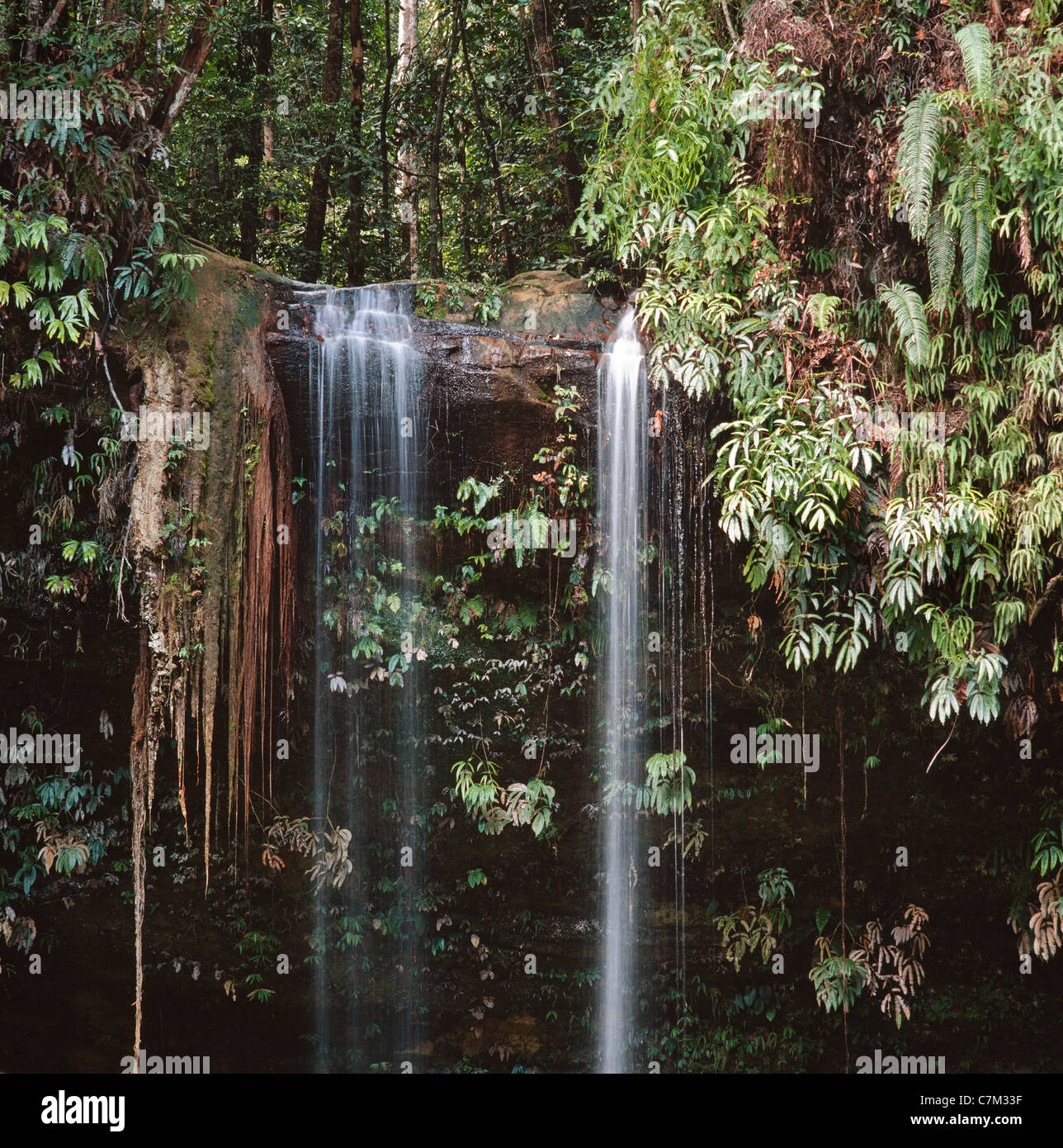 Cascade Jungle, Mulu National Park, Sarawak, Bornéo, Malaisie Orientale Banque D'Images